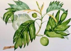 Breadfruit Branch