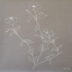 Rockrose line drawing .05