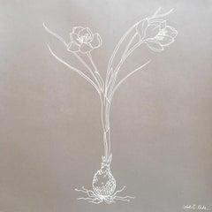 Crocus line drawing .01
