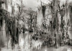 Backwater Swamp, Fargo, Georgia