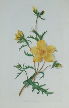 20th Century Mixed Media Yellow Flower Still Life