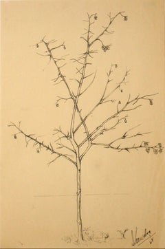 1960s Vintage Drawing of a Tree with Flowers