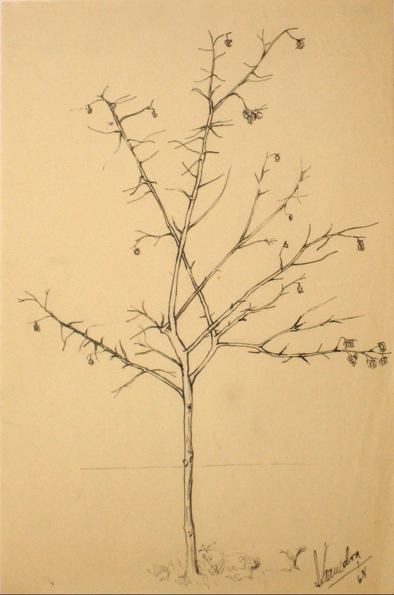 Unknown Still-Life - 1960s Vintage Drawing of a Tree with Flowers