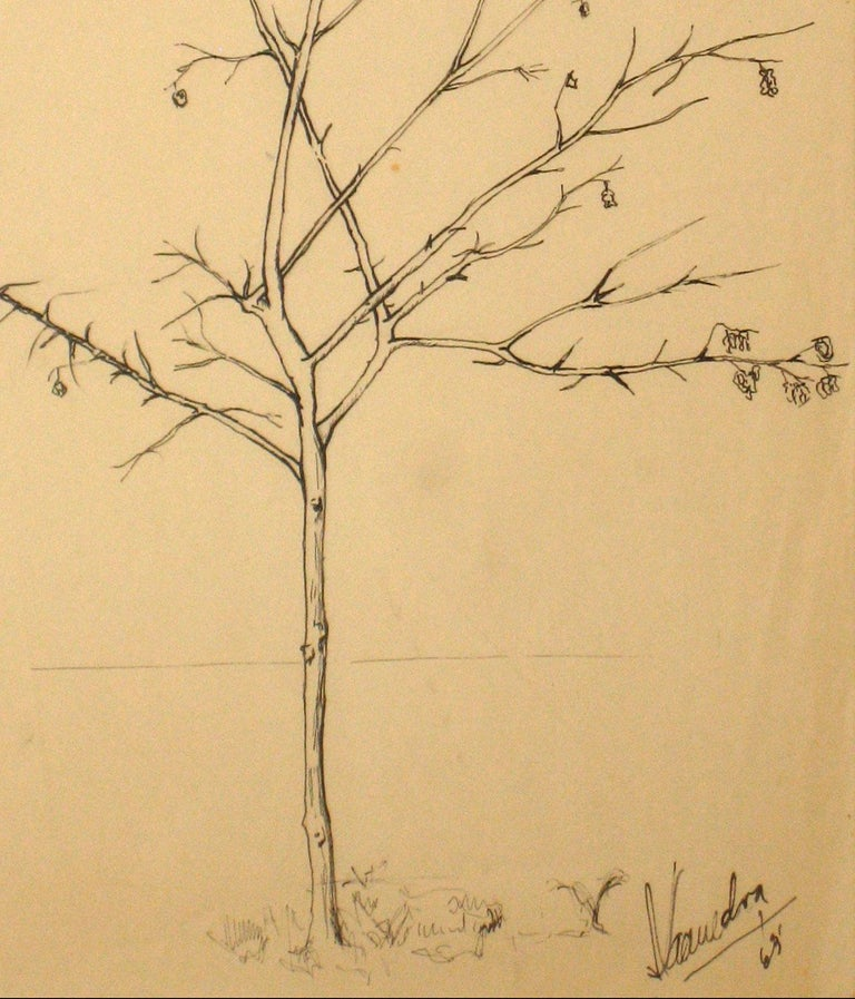 1960s Vintage Drawing of a Tree with Flowers  - Art by Unknown