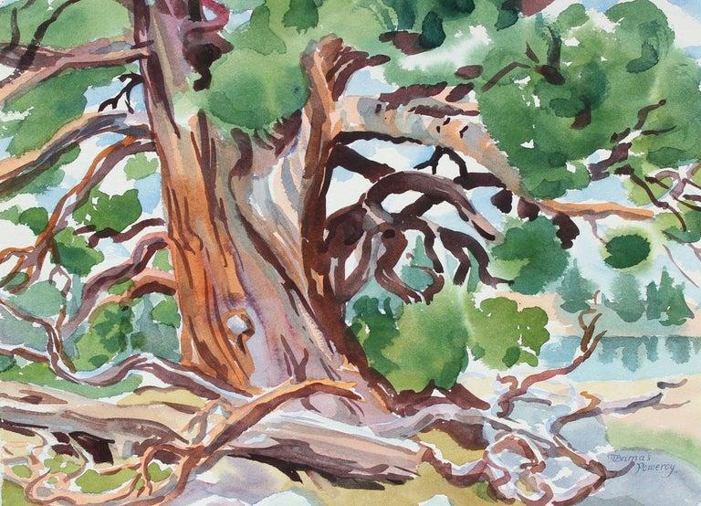 """Mary Pomeroy Landscape Art - """"High Sierra Veteran"""" Watercolor on Paper"""