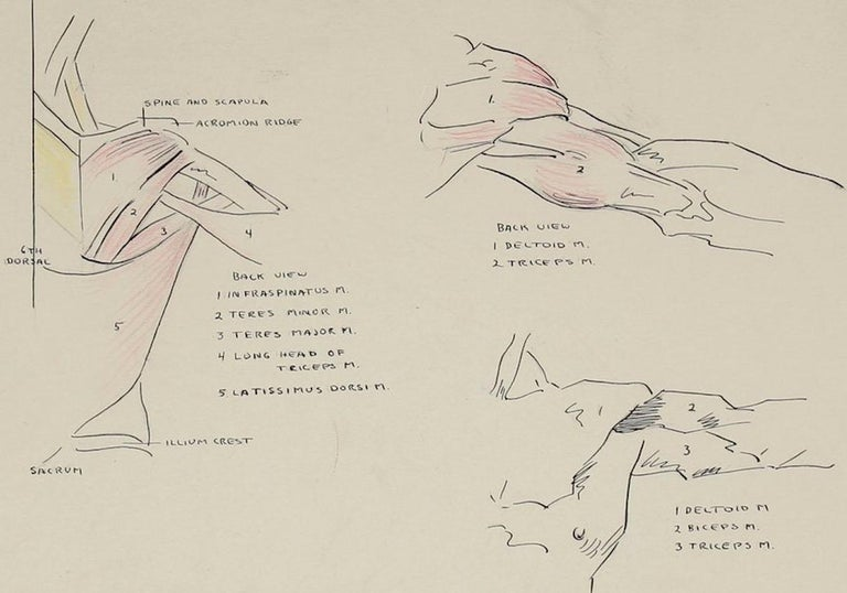 Details of the Human Shoulder 1951 Ink & Graphite - Art by Dellard Cassity