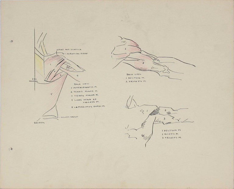 Dellard Cassity Still-Life - Details of the Human Shoulder 1951 Ink & Graphite