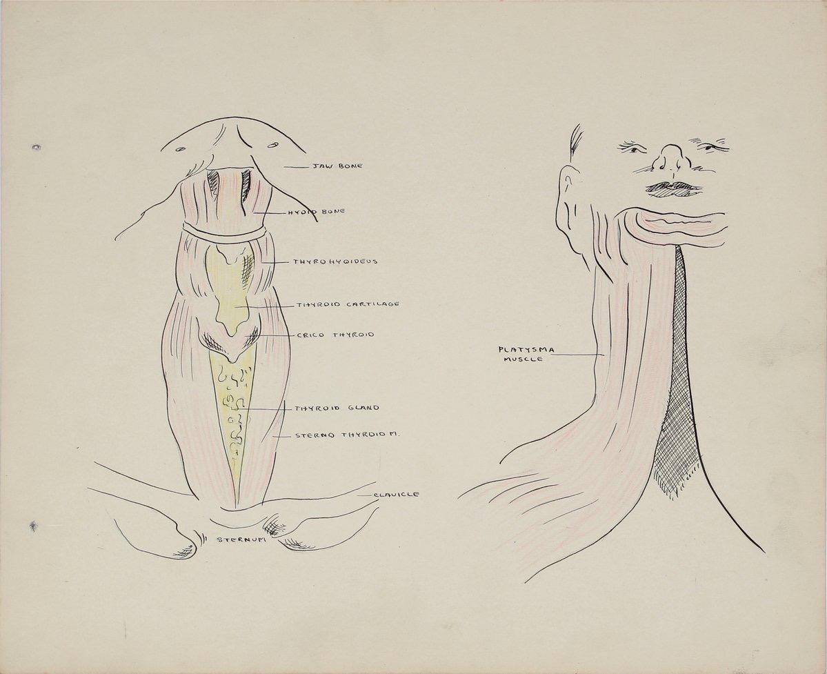 Academic Throat Study 1950s Mixed Media
