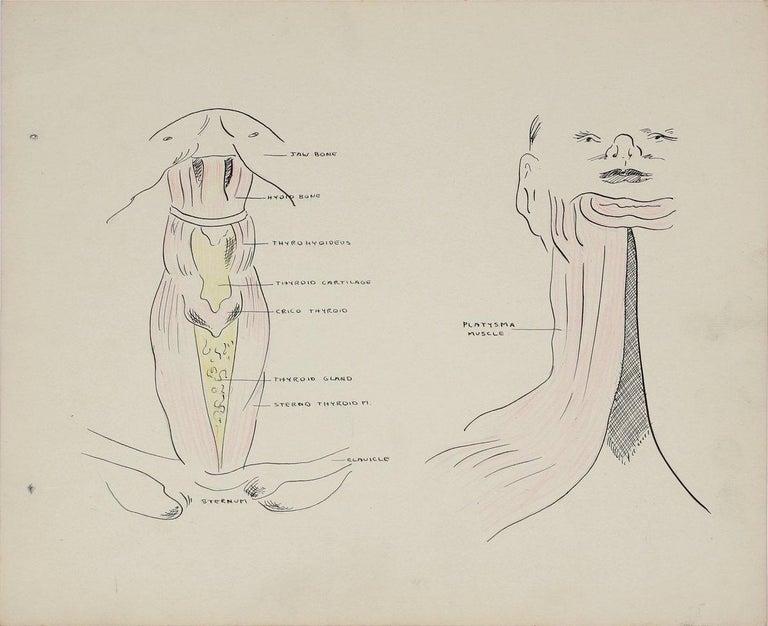 Dellard Cassity Still-Life - Academic Throat Study 1950s Mixed Media