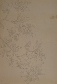 Simple Botanical Drawing Mid Century Graphite