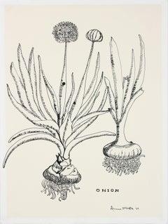 """Onion"" 1969 Still Life Botanic Ink Drawing"