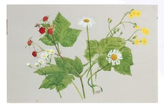 """""""Flower in Our Camp"""" 20th Century Watercolor Botanic Study"""
