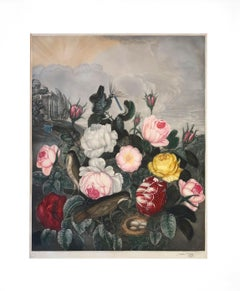 Roses (after Thornton's Temple of Flora)
