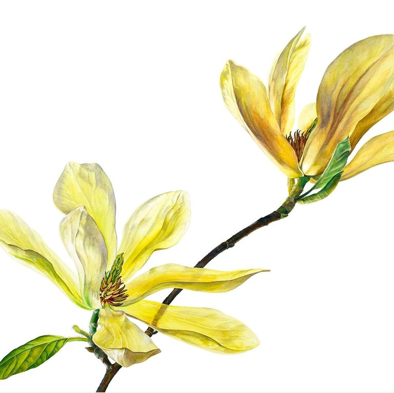 Rosie Sanders Landscape Art - Magnolia Butterflies