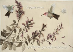 Hummingbirds and Salvia: Lafayette Park / botanical watercolor