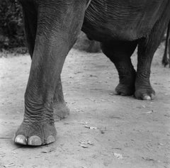 Elephant - Limited Edition - Oversize print