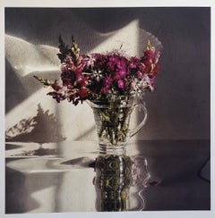 Sweet Williams, Large Format Flowers Photo 24X20 Color Photograph Beach House