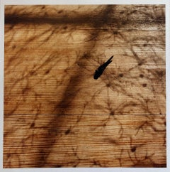 Dragonfly, Large Format Photo 24X20 Color Photograph Beach House