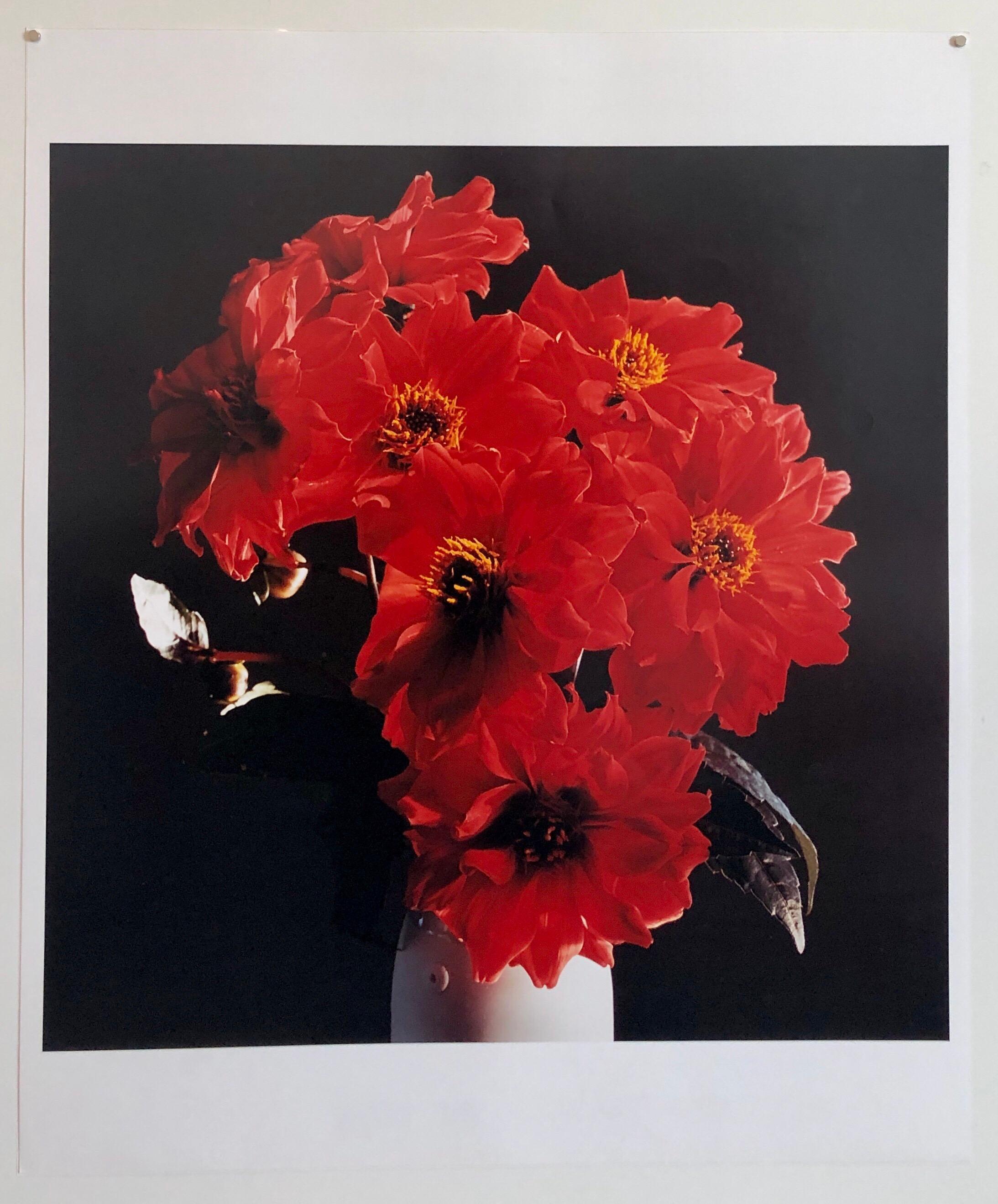 Great Dahlias, Large Format Flowers Photo 24X20 Color Photograph Beach House