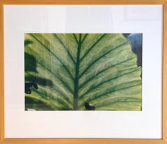Luminous Leaf Color Photo C Print Foliage Vintage Plant Photograph Evelyn Lauder