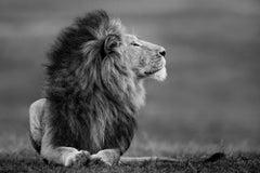 Master of the Mara
