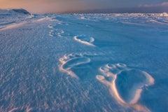 Polar Impressions
