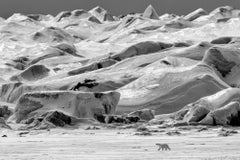 Polar Vista