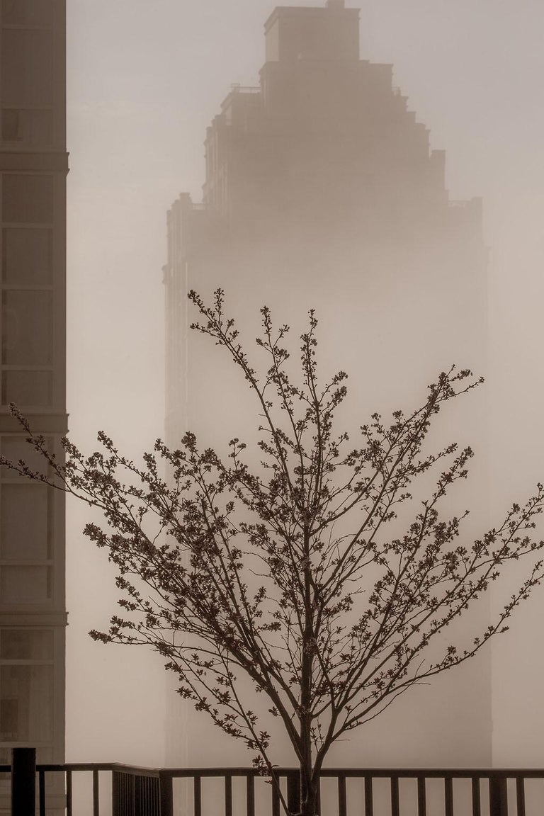 """Allen Singer Color Photograph - """"Rooftop Fog"""", Urban Photography, Architecture, Tree, New York City, Sepia"""
