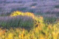 """Pond"", Color Nature Photography, Landscape, Impressionist, Yellow, Purple"
