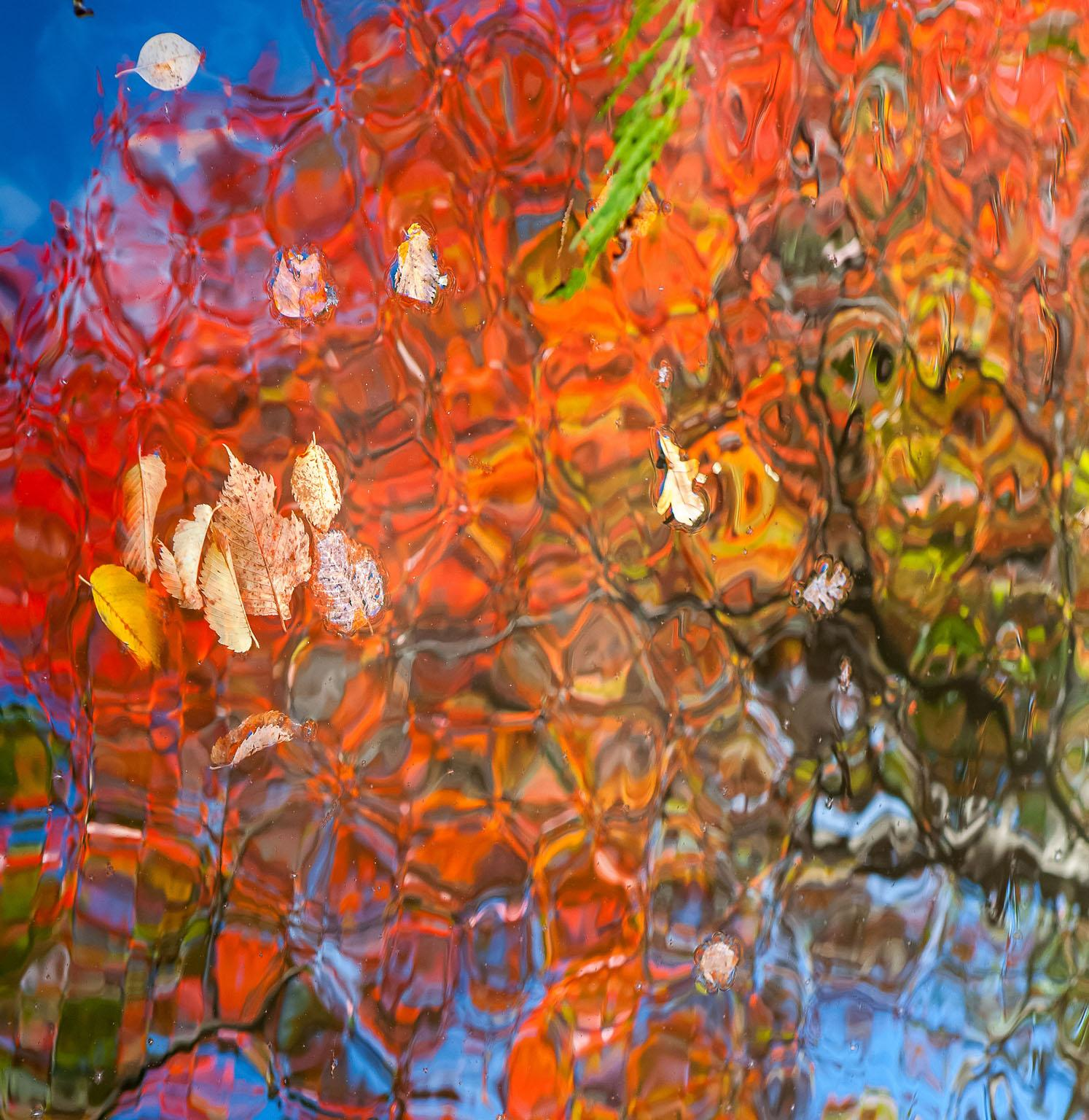 """Central Park Reflections"", Color Nature Photography, Landscape, Impressionist"