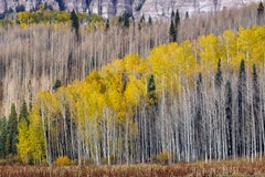 """""""Forest"""", Color Nature Photography, Landscape, Trees, Autumn, Yellow"""
