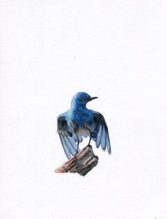 Dina Brodsky, Bluebird, realist animal watercolor on paper, 2019