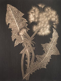 Margot Glass, Dandelion with Bud, realist goldpoint floral still life drawing