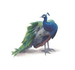 Dina Brodsky, Peacock, realist gouache on paper miniature bird portrait, 2019