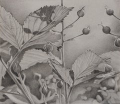 Buds and Leaves, photorealist graphite floral drawing, 2018