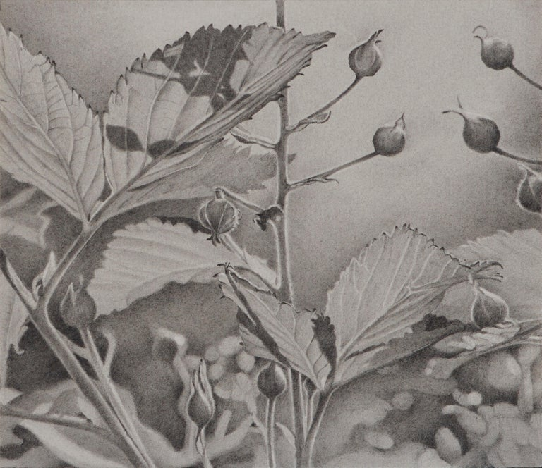 Mary Reilly, Buds and Leaves, photorealist graphite floral drawing, 2018 - Art by Mary Reilly