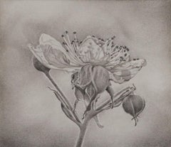 Mary Reilly, Flower Petals, photorealist graphite floral drawing, 2018