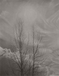 Mary Reilly, Bare Trees, photorealist graphite landscape drawing, 2019