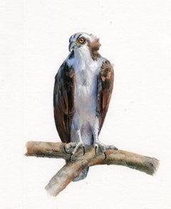 Osprey, contemporary realist gouache on paper animal miniature