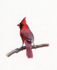 Dina Brodsky, Cardinal, realist gouache on paper miniature animal painting, 2019