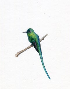 Dina Brodsky, Long Tailed Sylph, realist gouache miniature animal portrait, 2019