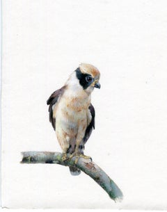 Dina Brodsky, Laughing Falcon, realist gouache miniature animal portrait, 2019
