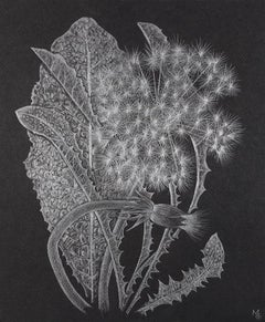 Margot Glass, Dandelion with Bud, realist floral graphite drawing, 2019