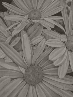 Daisies, grey realist graphite on paper floral drawing, 2020