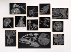 Dandelion Field Samples, graphite on panel floral drawing installation