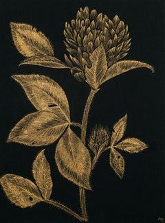 Red Clover #1, gold ink botanical still life drawing on black paper, 2020