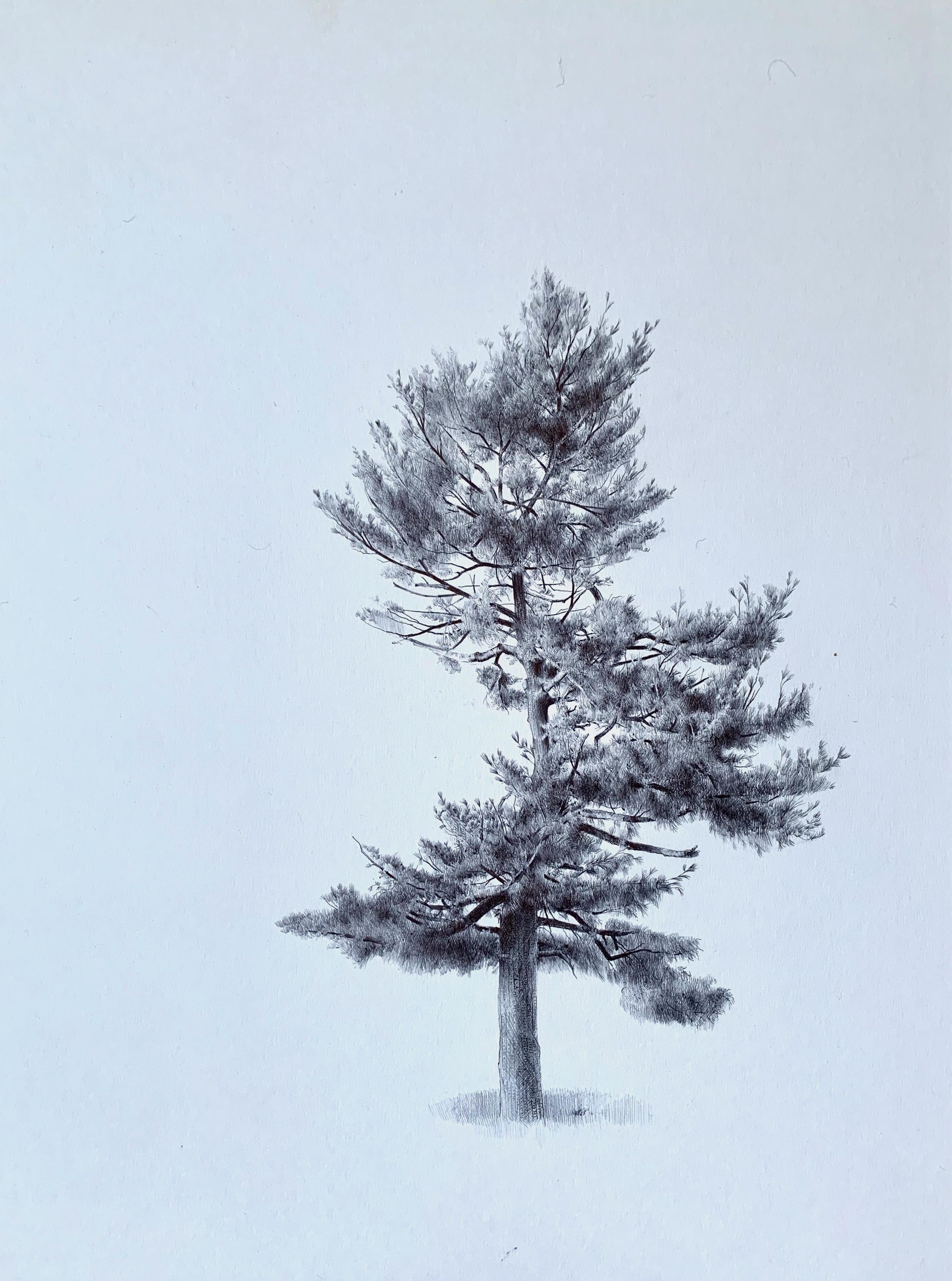 Untitled (Spiraling Tree), realist ballpoint pen still life drawing, 2020
