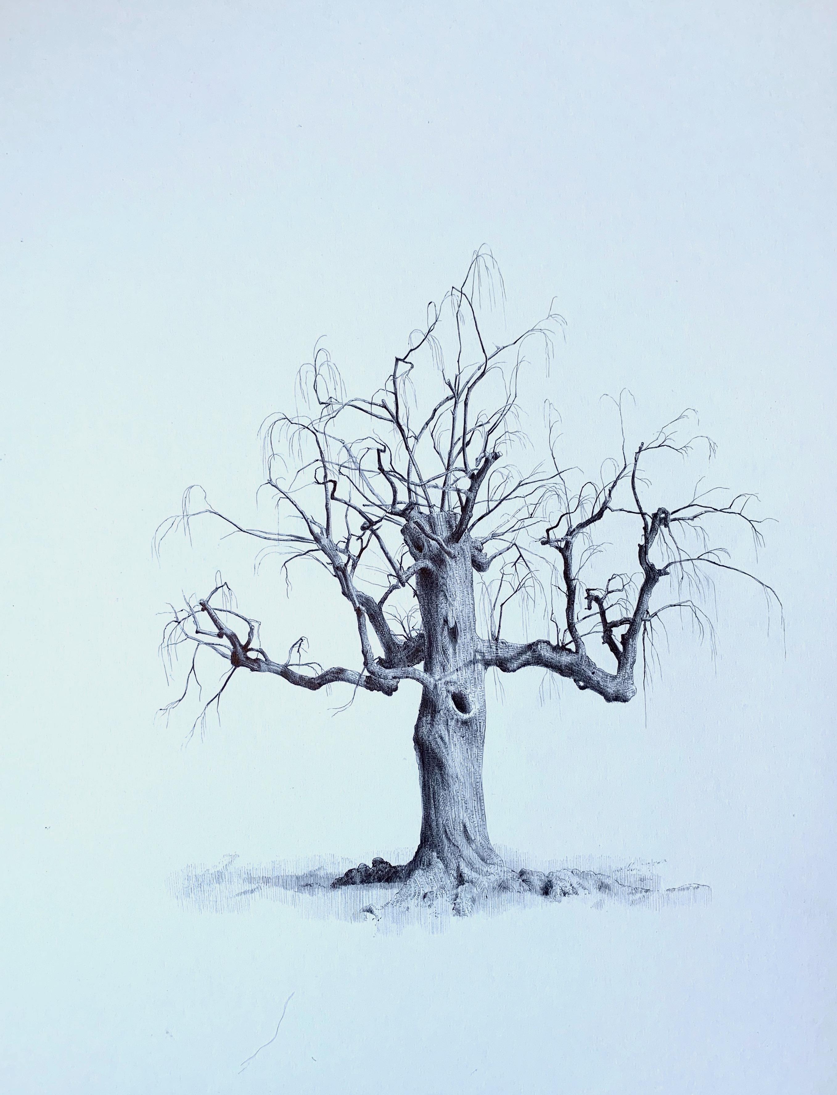 Untitled (Spirit Tree), realist ballpoint pen still life drawing, 2020