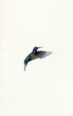 Violet Saberwing, realist gouache on paper miniature bird portrait, 2020