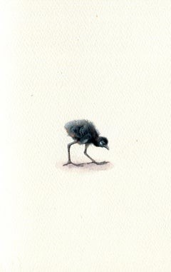 Waterhen Chick, realist gouache on paper miniature bird portrait, 2020